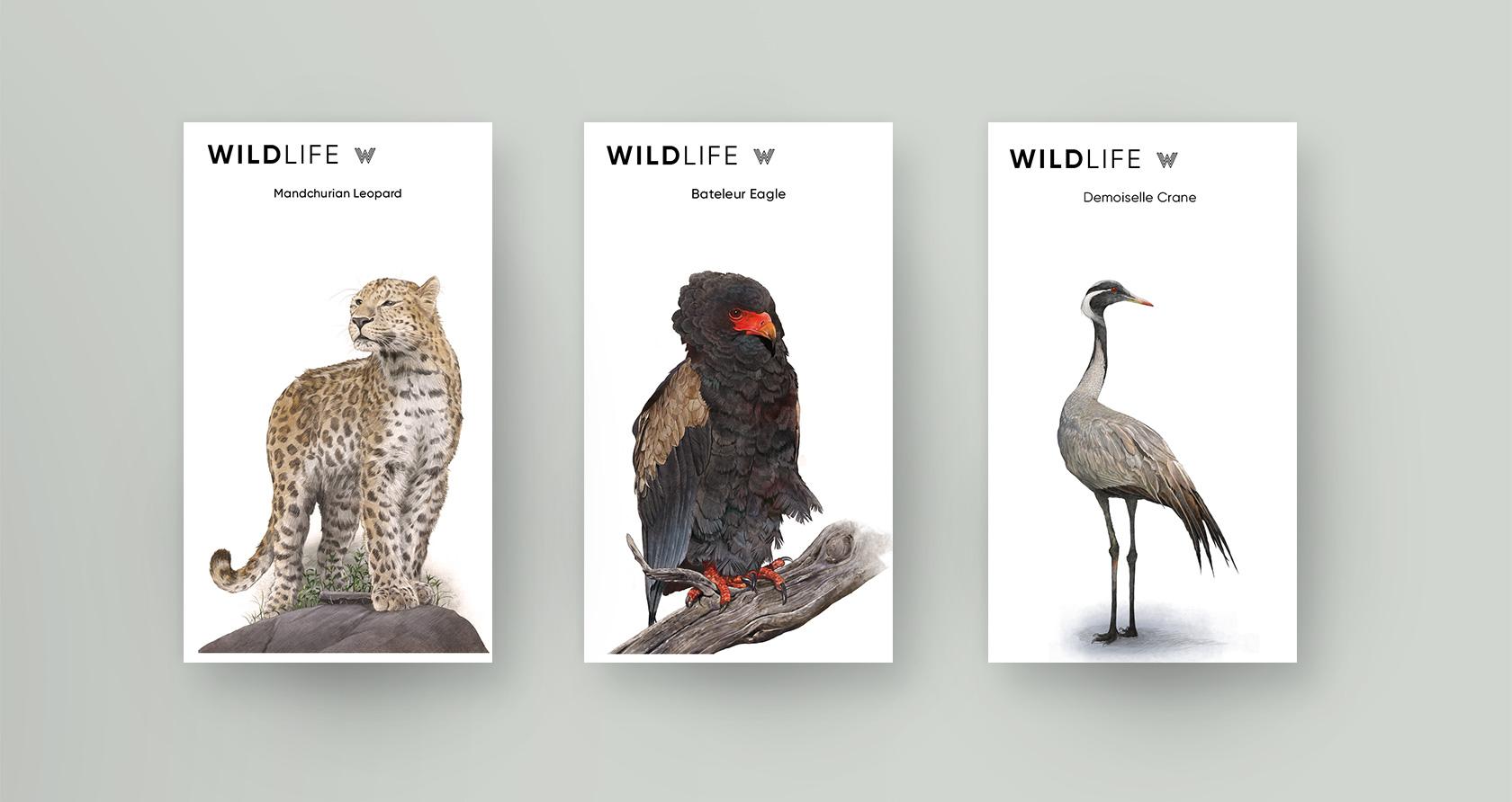 Animal Illustrated(2019)